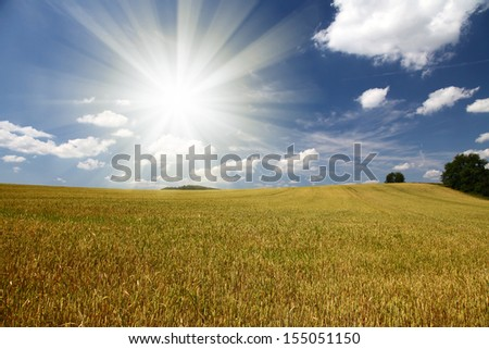Field of wheat,blue sky and sun. - stock photo