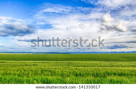 Field of wheat, cloud and mountain. HDR image