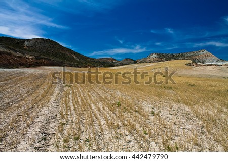 field of wheat in hot stone desert of bardenas in summertime with blue sky