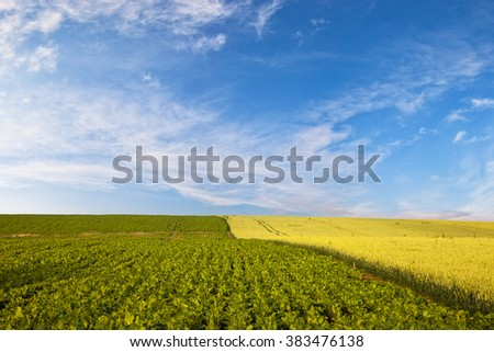Field of wheat on blue sky background. - stock photo
