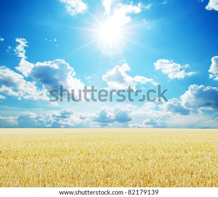 Field of wheat over blue sky - stock photo