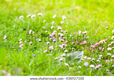field of white and pink daisies in a meadow - stock photo
