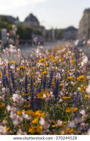 field of wild bright flowers with shallow dof - stock photo