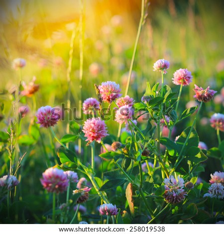 Field of wild flowers and sunset - stock photo