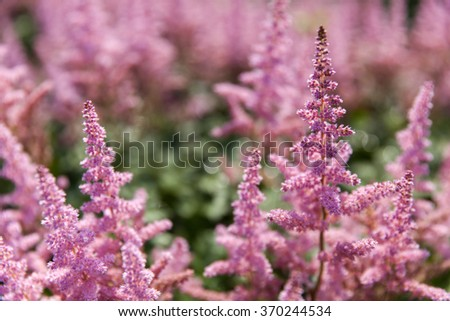 field of wild flowers with shallow dof - stock photo