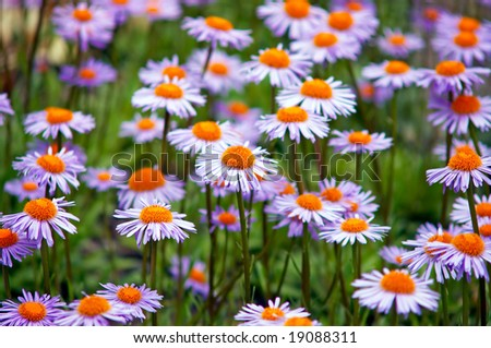 Field of wild violet flowers - stock photo