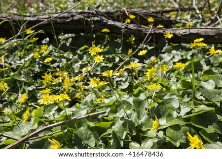 Field wild yellow flowers bed green stock photo royalty free field of wild yellow flowers bed of green grass and yellow flows spring background mightylinksfo