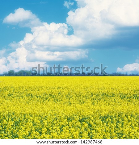 field of yellow flowers - stock photo