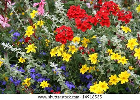 field's flowers - stock photo