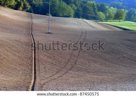 Field sown with wheat in Tuscany hill farmlands