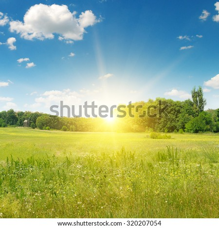 field, sunrise and blue sky - stock photo