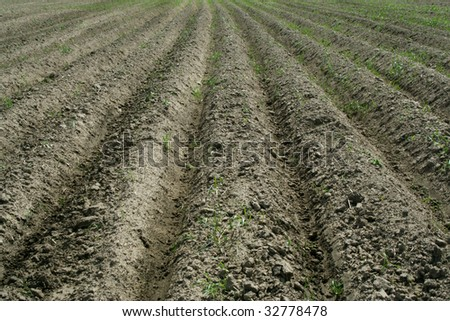 Field, the furrows, the ploughed field - stock photo