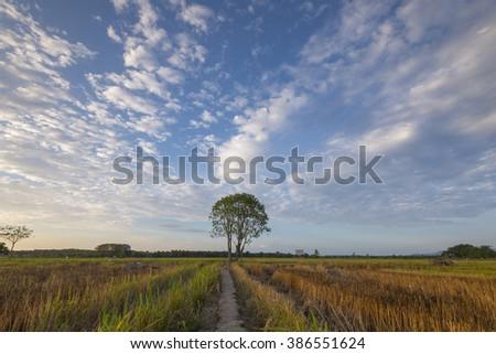 Field, Tree and Dramatic Sky  - stock photo