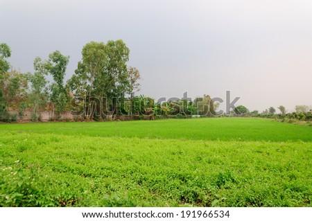 Field tree and sky before the rain - stock photo