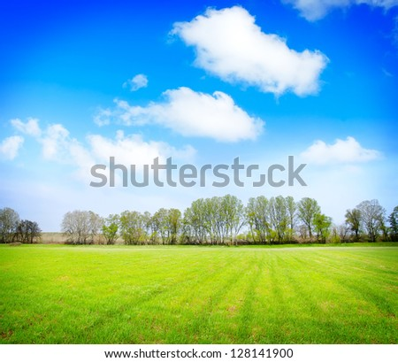 field, trees and blue sky