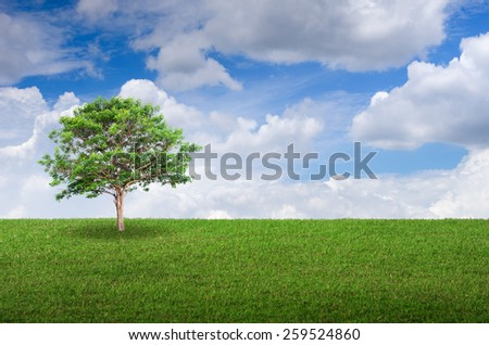 Field, trees and sky for background. - stock photo