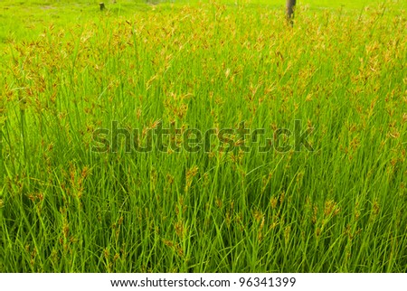 Field turf green - stock photo