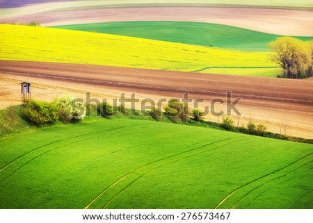 Field waves with trees in the spring, South Moravia, Czech Republic