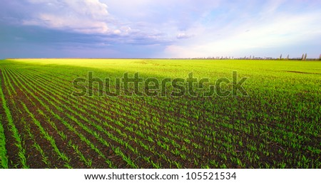 Field with a green grass on a lobby the plan and the cloudy sky with sun gleams. Landscape.