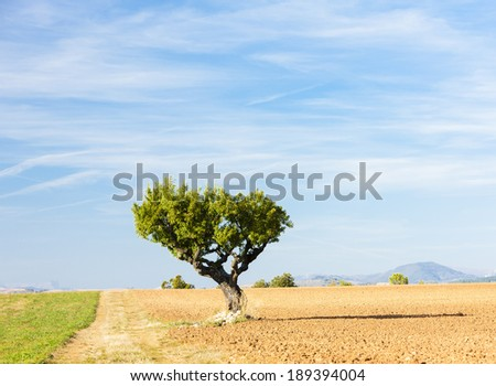 field with a tree, Plateau de Valensole, Provence, France - stock photo