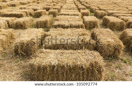 Field with bales of hay or straw countryside at harvest time - stock photo