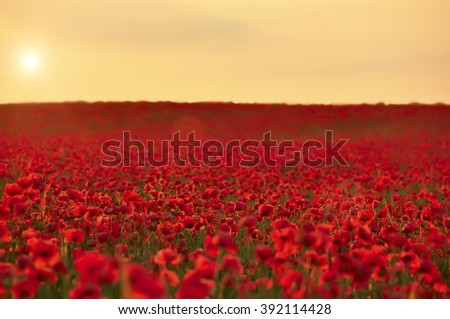 Field with blooming colorful flowers, poppies, the sun above the horizon. Dawn. sunset. Plenty of room.  - stock photo