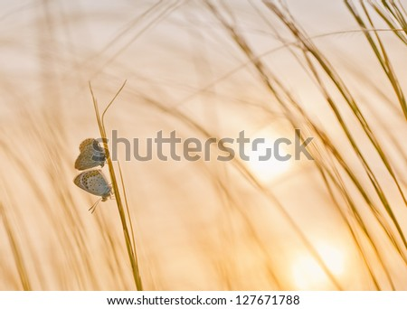 Field with butterfly and sunshine - stock photo