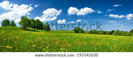 Field with dandelions and blue sky - stock photo