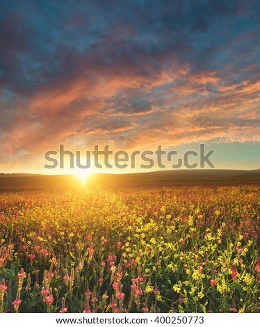 Field With Flowers During Sundown Beautiful Summer Landscape