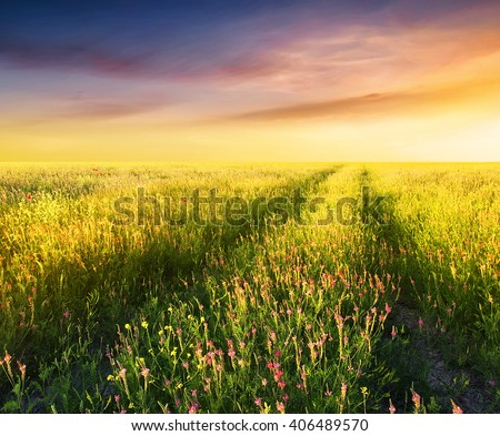 Field with flowers during sundown. Beautiful summer landscape