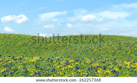Field with grass and flowers on a background of blue sky - stock photo