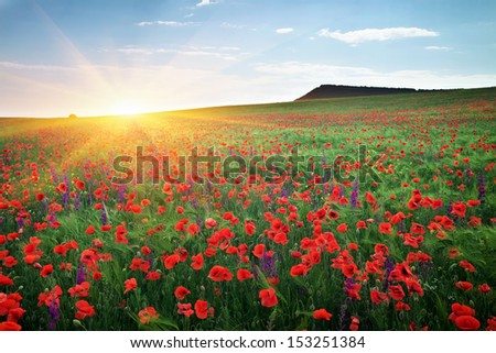 Field with grass, violet flowers and red poppies - stock photo