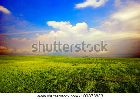 field with green grass in the sunny sky background