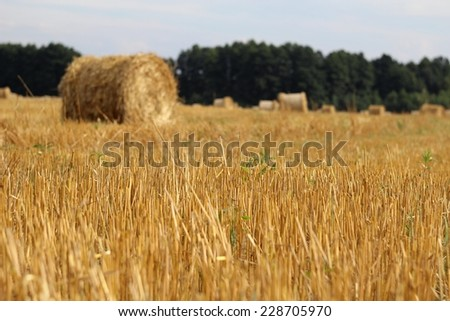 Field with hay bales - stock photo