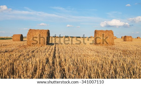 Field with natural straw bales.