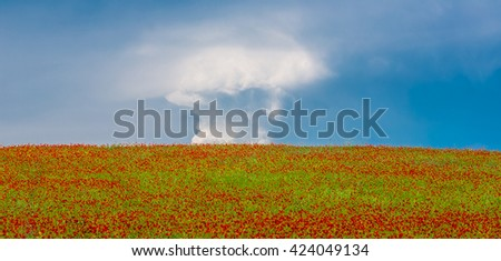 Field with poppies and sky with clouds - stock photo
