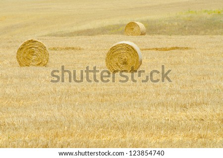 Field with rolls of hay on summer day - stock photo