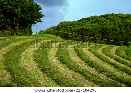 field with rows of round hay under a cloudy sky - stock photo