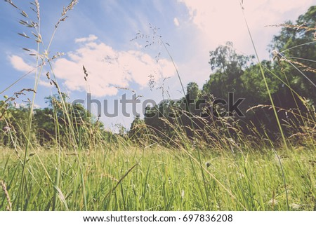 field with summer flowers blooming with blur background and low vantage point against blue sky - vintage film look
