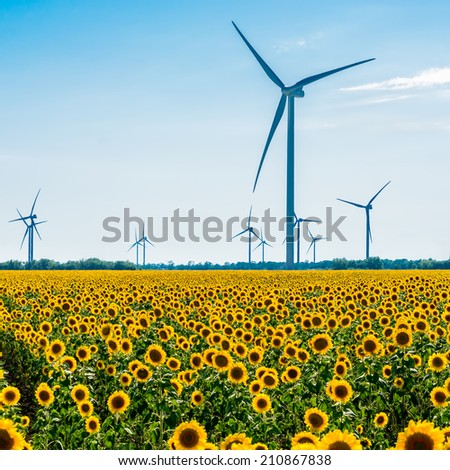Field with sunflowers and eco power, wind turbines