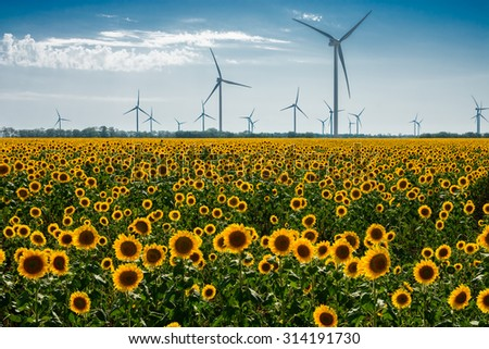 Field with sunflowers and eco power, wind turbines - stock photo