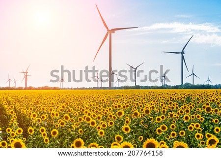 Field with sunflowers and eco power, wind turbines with sun - stock photo