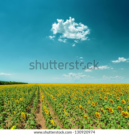 field with sunflowers under cloudy sky - stock photo
