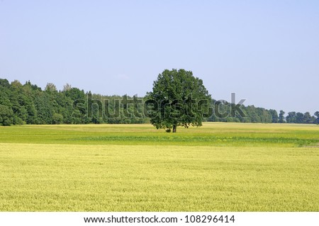Field with tree and blue sky