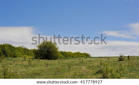 field with trees and grass and a wonderful nebaneba