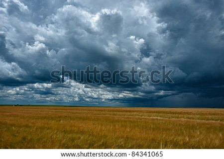field with wheat and cloudy sky, hdr image - stock photo