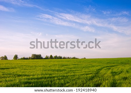 Field with winter crops. Spring,  evening.