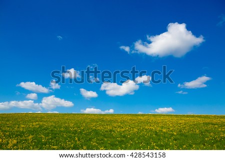 Field with yellow dandelions to the horizon. Rural views to the flower meadow and the blue sky. Pastoral panorama of nature summer. Undulating terrain. Beautiful landscape of a Sunny day.  - stock photo