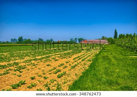 Field with young fresh sprouts in spring on sunny day, countryside in Belgium, Benelux, HDR
