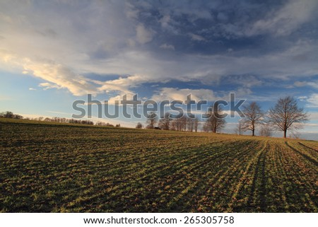 Field with young green grass in spring time before plowing with blue sky. - stock photo